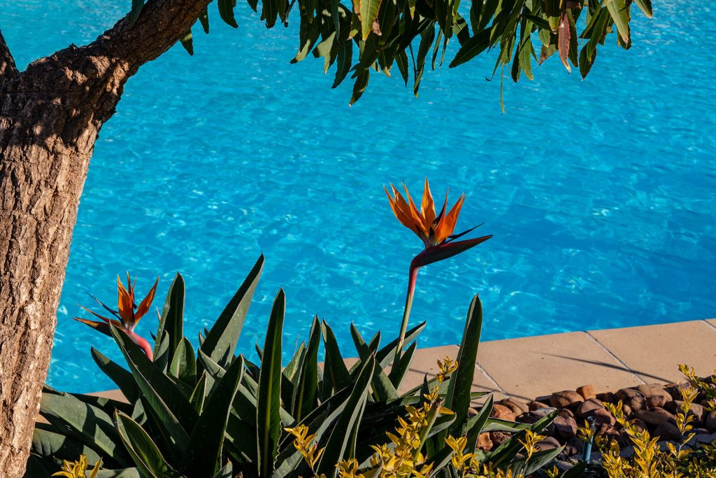 swimming-pool-side-plants